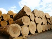 積み上がる材木